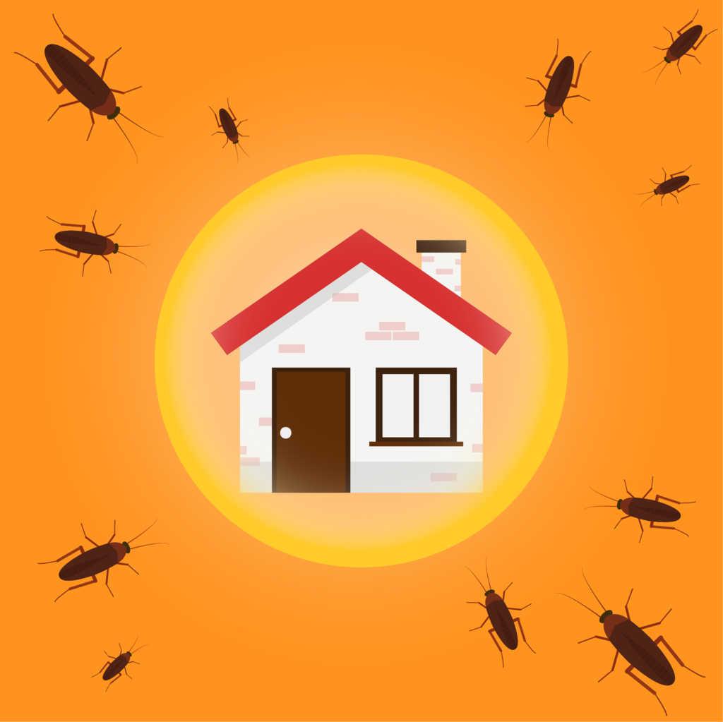 10 trucos para prevenir la aparición de cucarachas en tu hogar